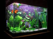 Оформляю и ухаживаю за аквариумами,  продажа аквариумных рыбок