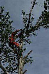 удаление кронирование аварийных и сложных деревьев