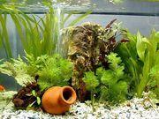 Обслуживание аквариумов, дизайнерское оформление и консультации специал