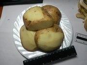 Картофель оптом с доставкой по РФ
