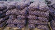 Картофель оптом от 5, 5 рублей с доставкой