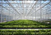 Участки для  теплицы овощехранилища