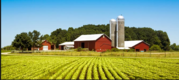 Участки для фермерского хозяйства овощехранилища ярмарки площадки